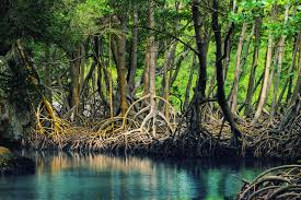 dans-les-brumes-mangroves